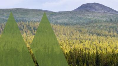 113 miljoner kronor i resultat för Mellanskog