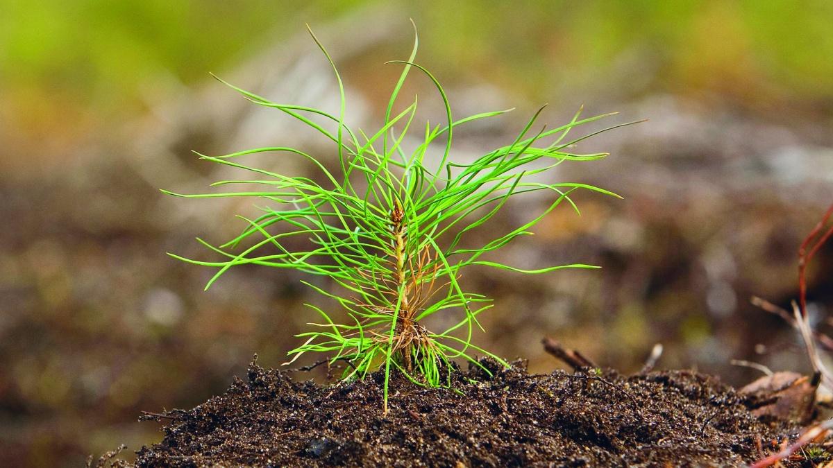 Vår syn på hållbart skogsbruk