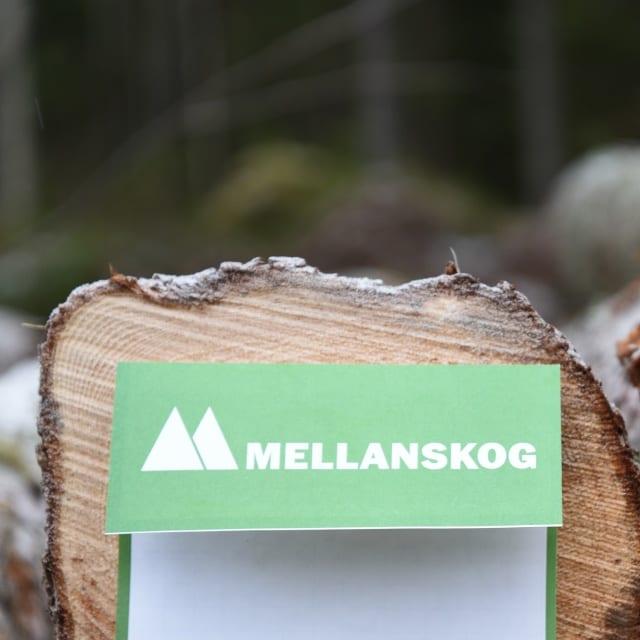 Vältlapp på stock Mellanskog