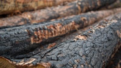 Fem miljoner till branddrabbade skogsägare