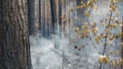 Fri webbutbildning om skogsbrand och eftersläckning/efterbevakning
