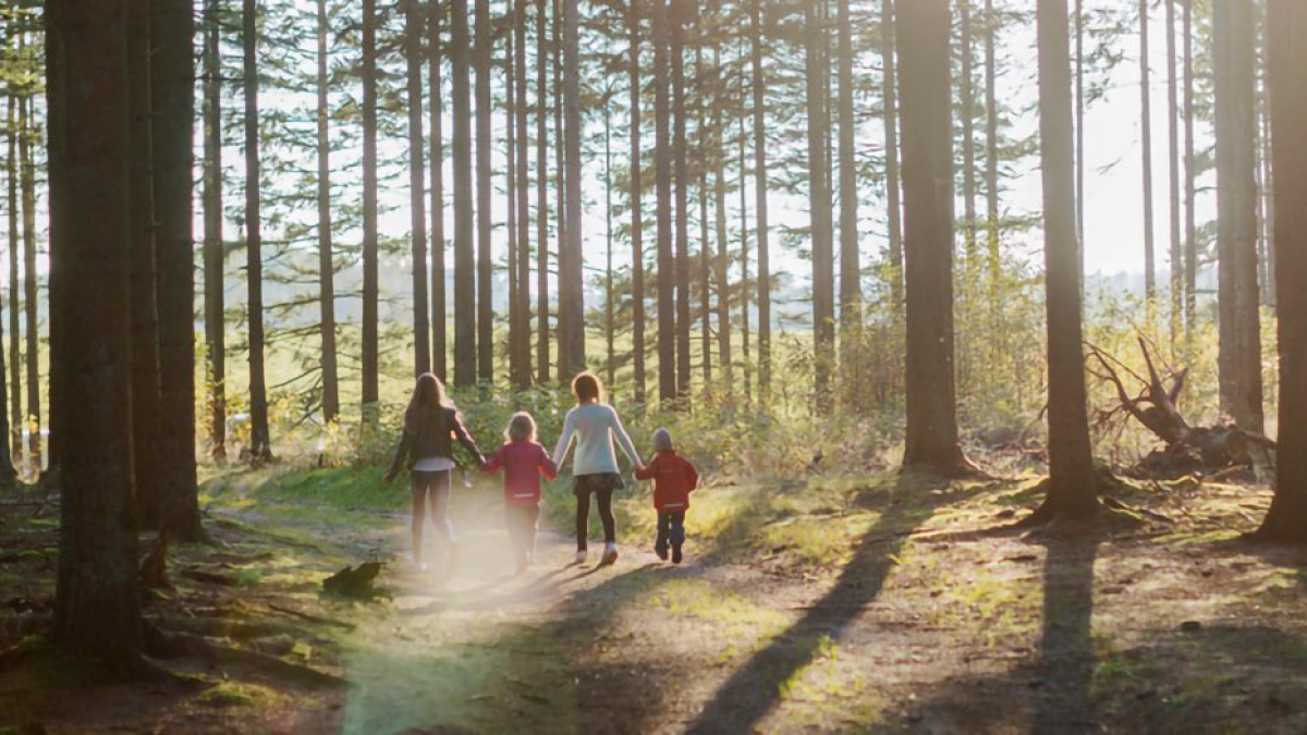 Det här är Mellanskog