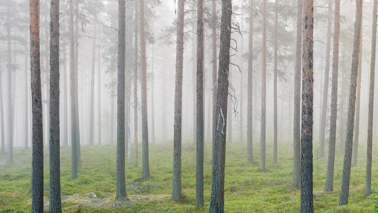 Världen skakar – står skogen stadigt?