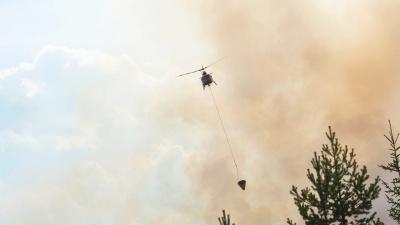 Lär dig mer om skogsbrand!