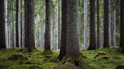 Mellanskog riktar mycket skarp kritik mot artskyddsutredningen